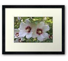 White Exotic Flowers Framed Print