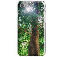Sunshine Cypress iPhone Case/Skin