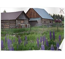 Lupines & Log Cabins Poster