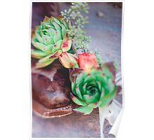 Dessert Rose  Poster