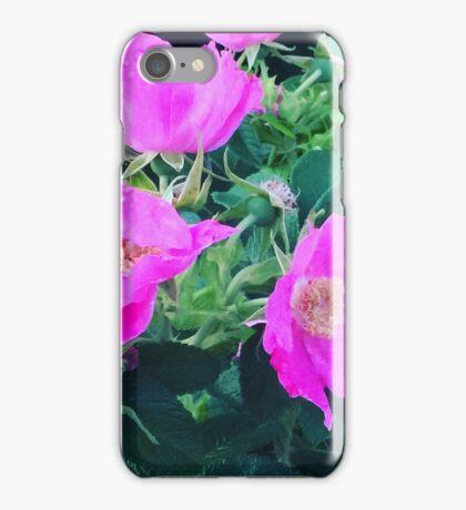 Rugosa Roses iPhone Case/Skin