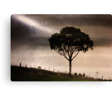 Magpies on the Fenceline Canvas Print