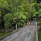 Daintree Rainforest by V1mage
