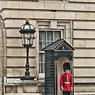 Still On Guard by photograham