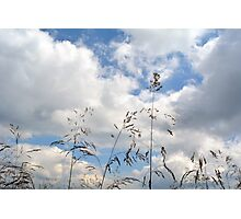 Plants close up against cloudy sky. Photographic Print