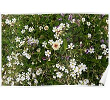 Natural pattern with white small flowers in the grass. Poster