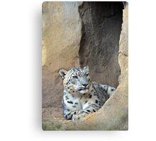 The Snow Leopard Canvas Print