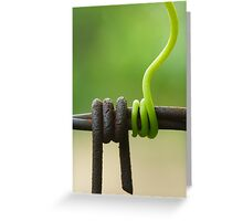 Grapevine tendril around the barbed wire Greeting Card
