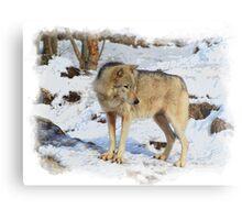 Grey Wolf in Snow Winter Scene Metal Print