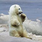 Cute Polar Bear Cub & Arctic Ice  by Val  Brackenridge