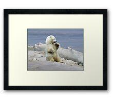 Cute Polar Bear Cub & Arctic Ice  Framed Print
