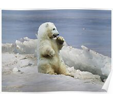Cute Polar Bear Cub & Arctic Ice  Poster
