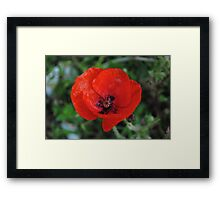 A Poppy By Any Other Name Framed Print