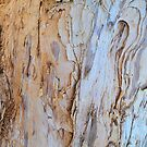 PAPER BARK by Margaret Stevens