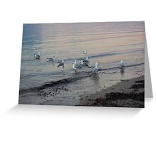 Seagulls at Sunset on the Seashore Greeting Card