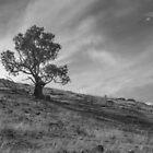 Tree on a Hill by Bruce Reardon