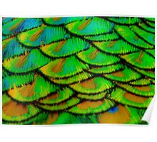 Peacock feather armour Poster