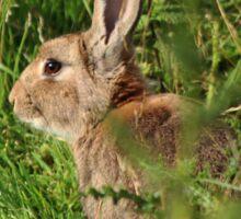 Rabbit catching some rays Sticker