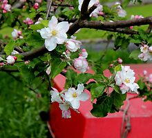 Blossoms and a boat by Michelle Neeling