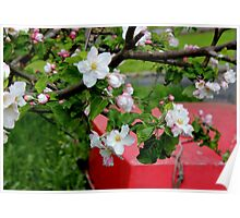 Blossoms and a boat Poster