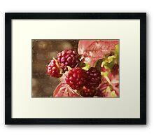 painted raspberries Framed Print