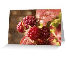 painted raspberries Greeting Card