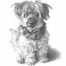 furry puppy drawing by Mike Theuer