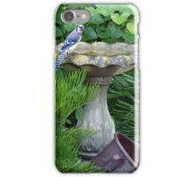 Blue Jay at the birdbath (full size) iPhone Case/Skin
