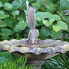 Squirrel at the Birdbath by Ostar-Digital