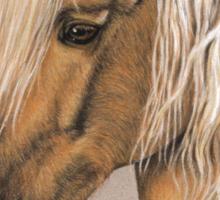 Spanish Horse - Berber Pferd Sticker