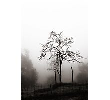 Tree in the mist Photographic Print