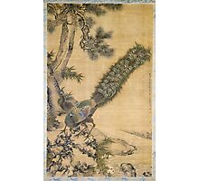 Shen Nanpin - Bamboo, Pine And Peacocks. Forest view: forest , trees,  fauna, nature, birds, animals, flora, flowers, plants, field, weekend Photographic Print