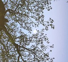 The Moon through the Trees by harriet-rose