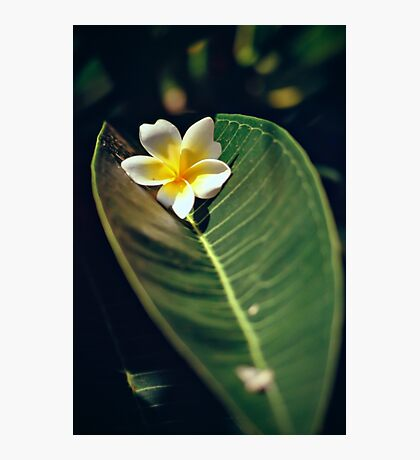 A wonderful tropical flower Photographic Print