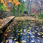 Autumn Pool - Sefton Cottage Mt Wilson by Bev Woodman