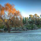 Frosty Morning by Steve Randall