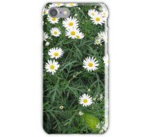 Daises  iPhone Case/Skin