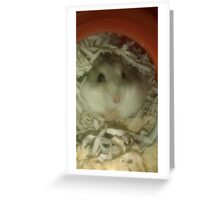 Grey the Hamster Greeting Card