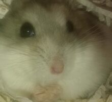 Grey the Hamster Sticker