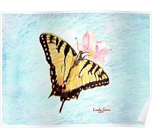 Monarch Butterfly onblue background Poster