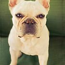 FRENCH BULLDOG ON GREEN by CRYROLFE