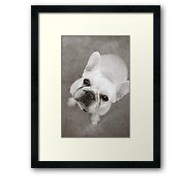 CREAMY FRENCH BULLDOG Framed Print