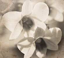 I Dream of White Orchids by MaureenAstrid