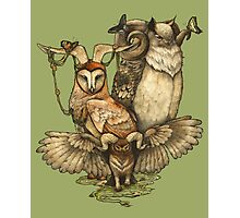 Goatowls (colour) Photographic Print