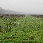 Misty Field by WildestArt