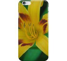 Flower Beauty - 21 iPhone Case/Skin