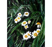 Daisies Wild English Countryside Flower Acrylic Painting On Paper Photographic Print