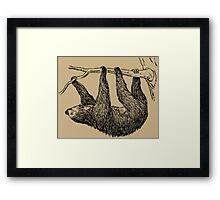 Vintage Sloth Framed Print