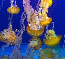 Jelly to Fish by kriss53