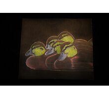 Ducklings Photographic Print